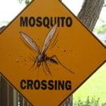 Hoe muggenbeten voorkomen tijdens het wandelen