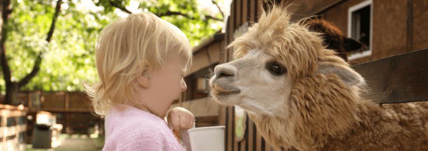 Alpaca En Kind