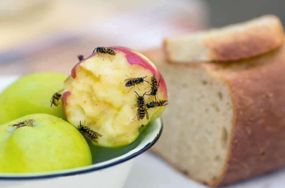 wespen die een appel eten