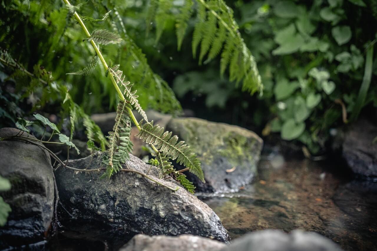 muggen stilstaand water