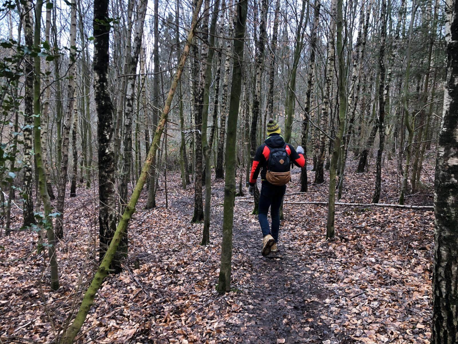 wandelen bossen